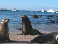 Economic Galapagos (Hotel-Yacht) 2 Islands