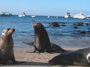Economic Galapagos (Hotel-Yacht) 2 Islands Photos