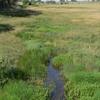 Lodgepole Creek
