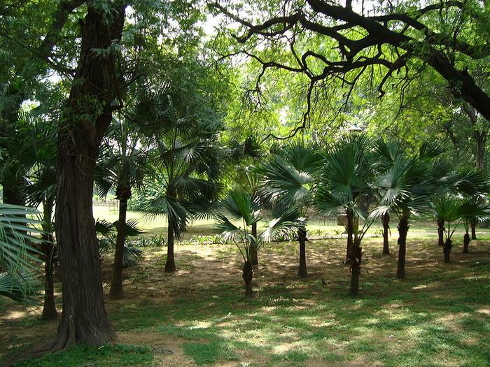 Lodhi Gardens Delhi Delhi India Photos