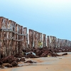 Logs @ Tajpur Beach - Purba Midinipur WB