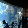 Long Beach Aquarium Of The Pacific