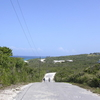 Long Island Road Bahamas