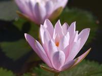 Lotus Museum