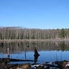 Lowell-Dracut-Tyngsboro State Forest