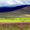 3 Day Tanzania Camping Safari