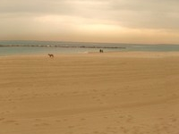 La Barceloneta