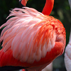 Lightmatter Flamingo