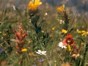 Harmony Flats Nature Reserve
