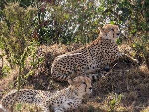 The Mara Express Safari