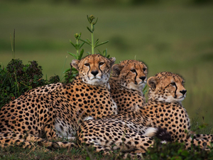 Masai Mara Budget Camping Safari Fotos