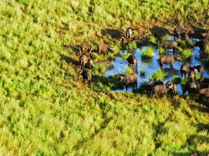 5 Days 4 Nights Amboseli / Lake Nakuru / Masai Mara Safari Photos