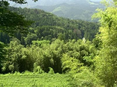 Magome Vista