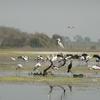 Manjira Wildlife Sanctuary