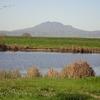 Marsh Creek California