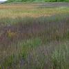 Marsh Grasses Along Upper Kvichak River
