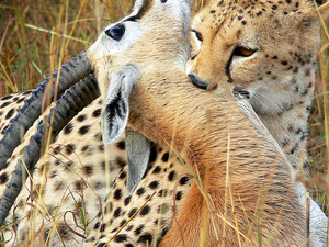 7 Days Masai Mara, Nakuru and Amboseli Package
