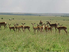 Masai Mara Plains