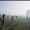 Mehtab Bagh Agra