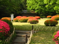 Meiji Shrine Inner Garden