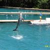 Miami Seaquarium Dolphin Jump