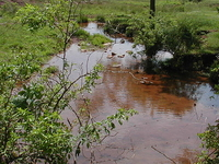 Middlebush Brook