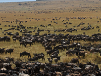 Great Migration Safari - Kenya