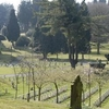View Of Aldershot Military Cemetery