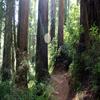 Miners Ridge Trail