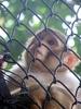 Monkey Patna Zoo