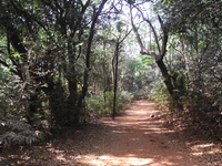Monkey Point Trail
