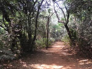Monkey Point Trail