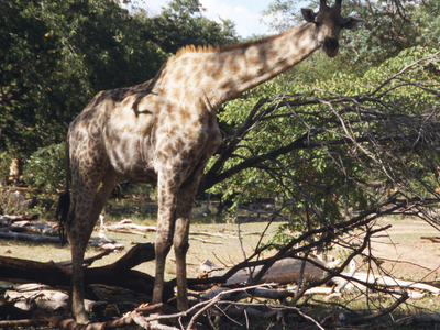 Mosi-oa-Tunya National Park