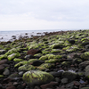 Moss Covered Lava Camiguin