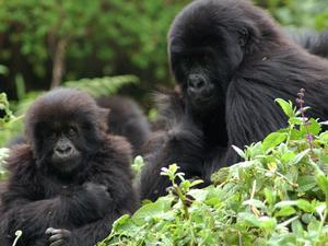 DR Congo & Rwanda Tour Fotos
