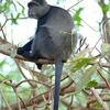 Mount Elgon National Park
