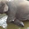 Elephant Safari Park and White-Water Rafting Adventure
