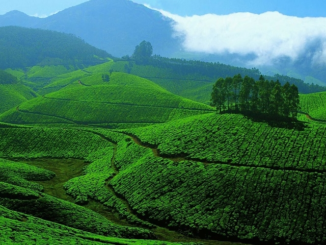 Munnar- (2N/3D)....Standard Package Photos