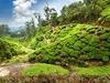 Munnar Tea Estate Landscape