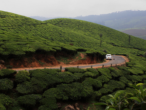 Short & Beauty of Munnar Tour Photos