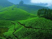 Diwali Kerala Tour