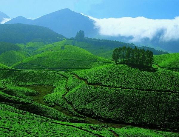 Diwali Kerala Tour Photos