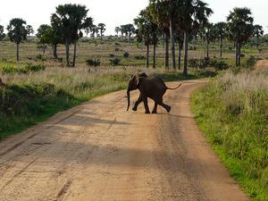 12 Days Uganda Wildlife Safari Photos