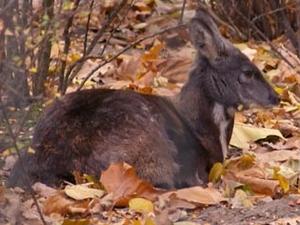 Kedarnath Wild Life Sanctuary