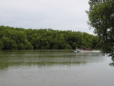Muthupettai Mangrove Forest