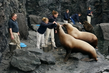 Staff Feeding Pinnipeds At The Aquarium