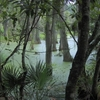 Audubon Swamp Garden