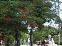 Melena del Sur