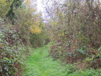 Mill Hill Old Railway Nature Reserve