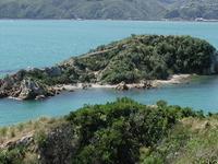 Mokopuna Island